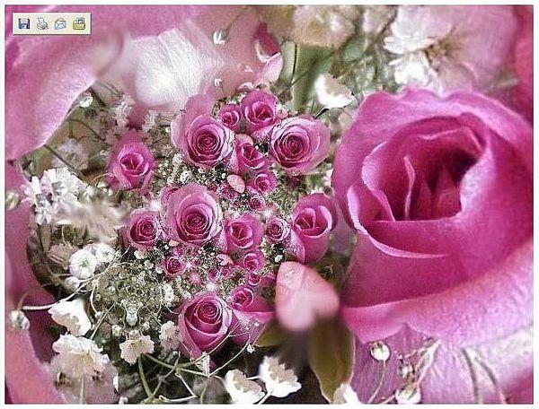 {#rose.jpg}
