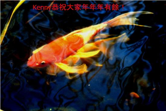 {#ny-fish550.jpg}