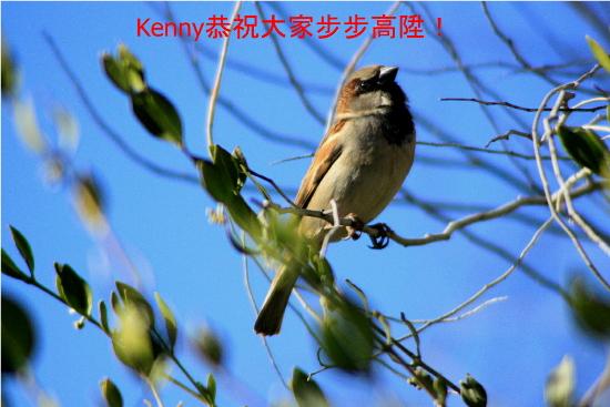 {#ny-bird step hight550.jpg}