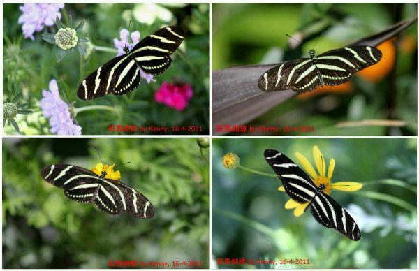 {#butterfly zebra-4 photo frame-a.jpg}