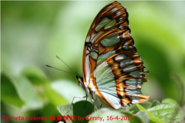 {#IMG_5031-butterfly001a.jpg}