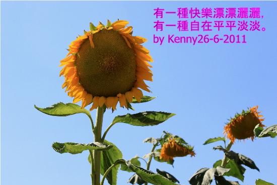 {#sunflower1.jpg}