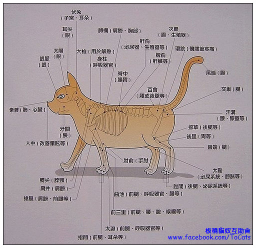 {#cat body points.jpg}