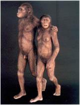 {#apes.jpg}