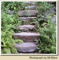 {#steps.jpg}