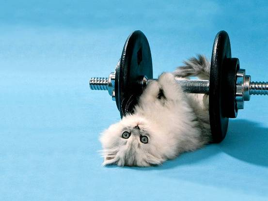 {#animal-funny-kitten-lifting-weights-backgrounds-wallpapers.jpg}