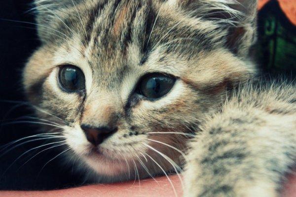 {#kitten_by_jenniferelizabeth-d3khybm.jpg}