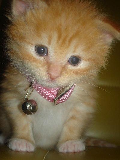{#ginger-tabby-kitten.jpg}