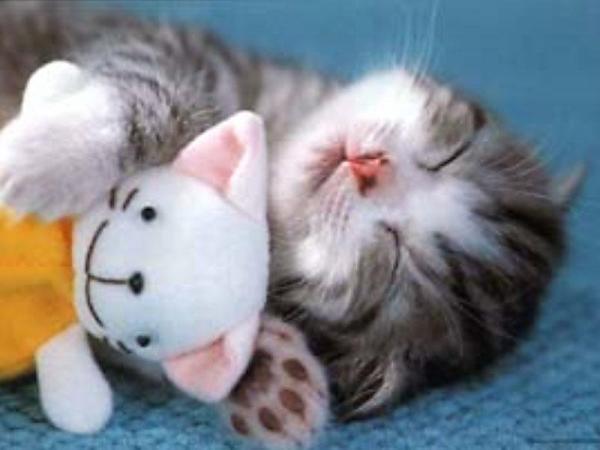 {#cute_kittens.jpg}