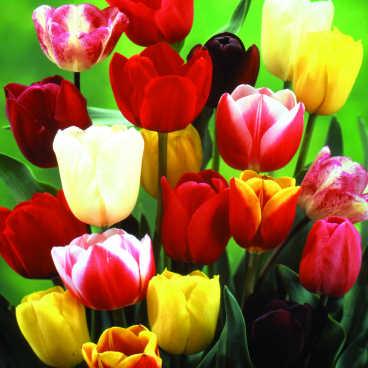 {#flower_bulb_fundraiser_lg.jpg}